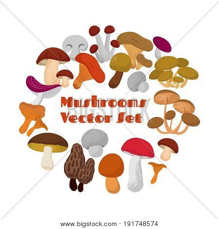Delicacies fresh edible mushrooms vector set. Mushrooms of collection in round form illustration