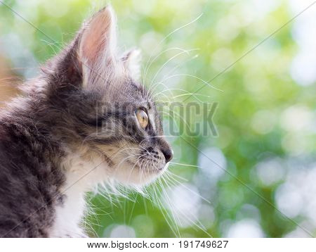 portrait of a cute fluffy cat on natural background