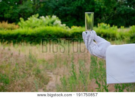 A waiter's hand in a white glove and with a white napkin holds an empty glass glass for a tequila long shot on a blurred background of nature green bushes and trees