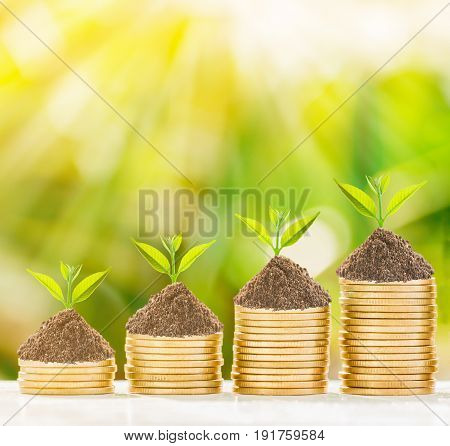 Tree growth in golden coins with fresh nature background business concept.