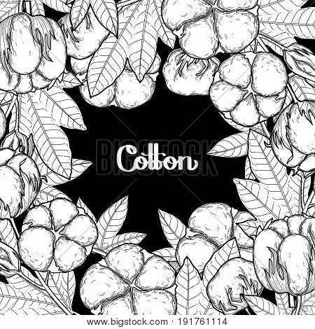 Graphic cotton plants. Vector card isolated on black background. Coloring book page design for adults and kids