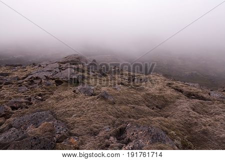Iceland Thick Moss Covered Lava Field In Mist. Foggy Weather In Icelandic Lava Field Covered With Th
