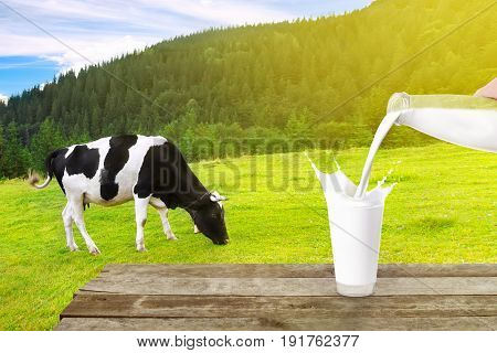 milk from bottle pouring into glass with splashes on table with cow on the meadow in the background. Glass of milk. Pouring milk. Splashes of milk from the glass