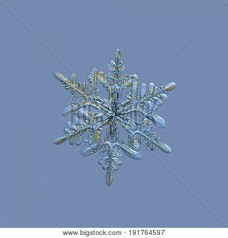 Snowflake isolated on uniform blue background. Macro photo of real snowflake: stellar dendrite snow crystal with elegant shape, six long, symmetrical arms with side branches and relief surface.