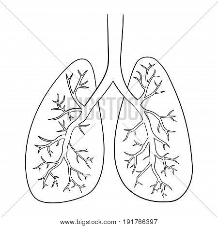 Vector illustration of lungs. Doodle drawing of human organ.
