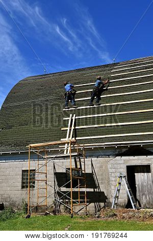 The first step in laying stringers by an unidentified Amish laborers on an old barn for the covering of a metal ro