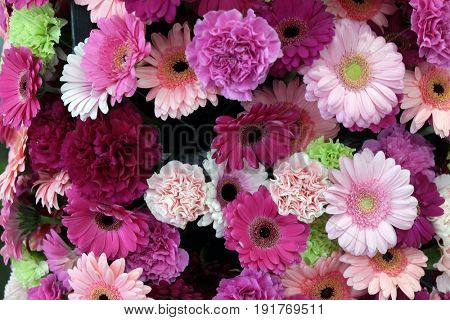 ZAGREB, CROATIA - MAY 31: Flowers exposed on Floraart, 51 international garden exhibition in Zagreb, on May 31, 2016.