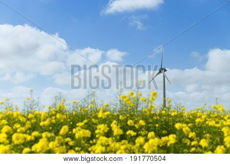 Windmills For Electric Power Behind Flowering Rapeseed Field In France. Agricultural Landscape On A