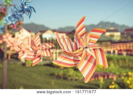 groups of flower-shape Pinwheels against sunbeams in parkChina.