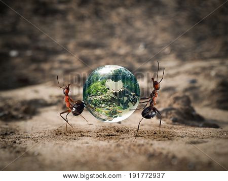The ants carry the green planet through the dry Sands