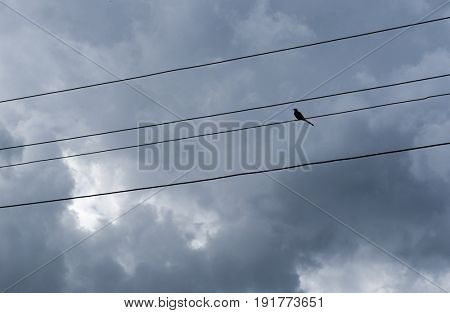 Bird on wires