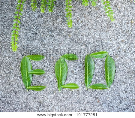 eco word composed of green leaves on concrete background