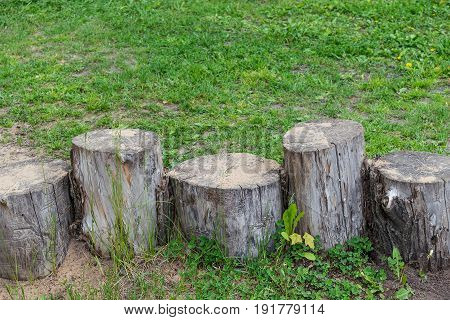 On the meadow with green grass there are five stumps of different height and thickness. The bark on the stumps ragged. At stumps sprinkled a little sand. There are cracks and visible annual rings.