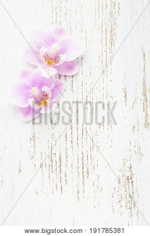 Two light pink orchids on wooden shabby background.