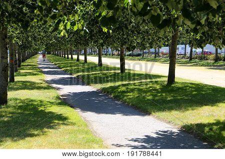 Long, green tree alley in Vannes, France