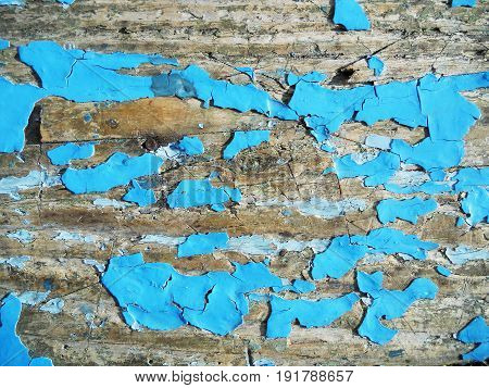 The photo shows background texture wood closeup fracture.Fracture drawing consisting of surface tree natural sample.