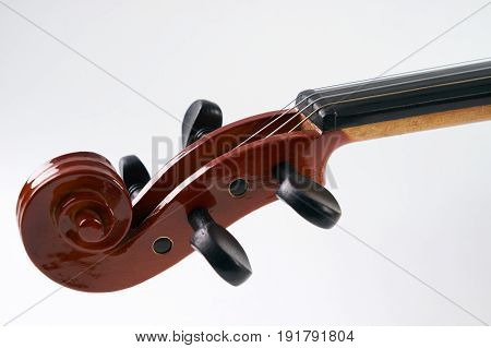 Close-up details of Violin head isolated on white background with copy space. Cello scroll on headstock and tuning pegs.