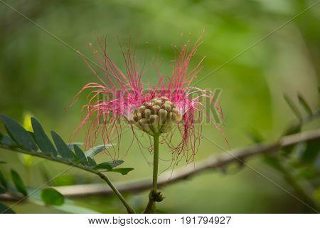 Pink Flower Powder Puff Or Head Powder Puff