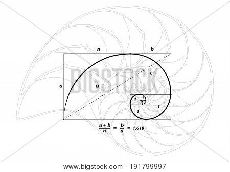 Golden section (ratio, divine proportion) and golden spiral on black and Shell line, vector illustration