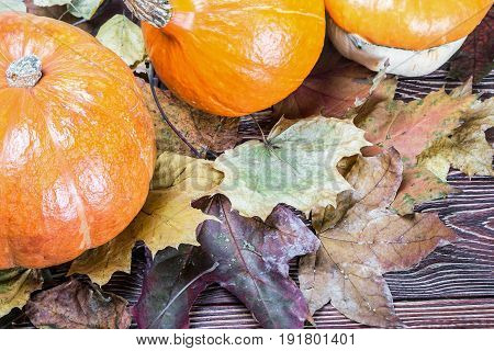 fresh produce pumpkins for Halloween. Holiday decorations