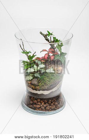 Plant arrangement in a glass vase (terrarium)