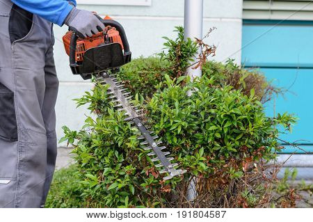 Landscape keeper cuts hedge in work clothes with a hedge trimmer