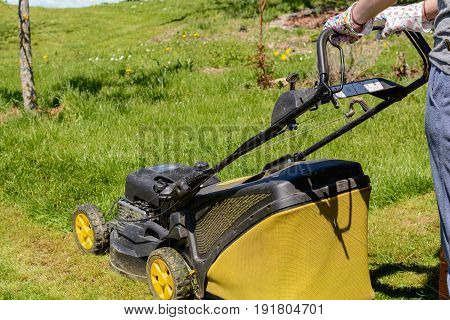 gardener cultivates the lawn with a lawn mower