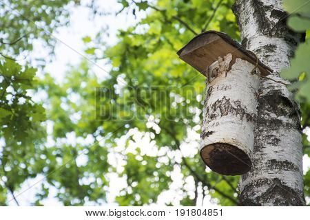 Spring birch on a bright sunny day hanging birdhouse.