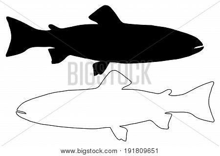 Trout silhouette vector , (Salmo trutta fario) , (Oncorhynchus mykiss)