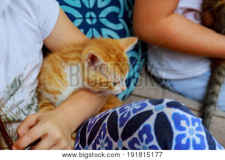 Newborn Kitten In Girl's Hand. New Born Baby Cat. Red Kitty In Caring Hands. Cute Baby Cat Close Pho