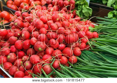 Fresh Red Radish and green spring onions on farmer's market counter.