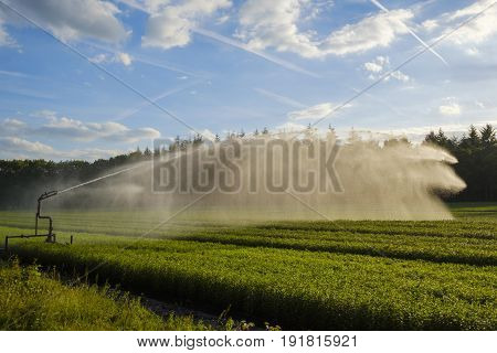 Crop spraying with a water cannon sprinkler ensures a proper distribution of water