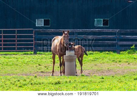 Mare with her foal in pastures of horse farms. selective focus