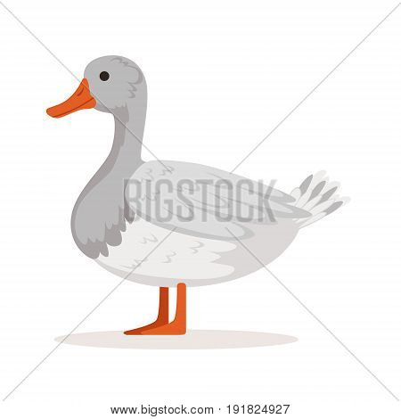 Domestic goose, poultry breeding vector Illustration isolated on a white background