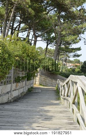 Wooded nature footpath next to the coastline of the Island of La Toja in the province of Pontevedra Galicia Spain.