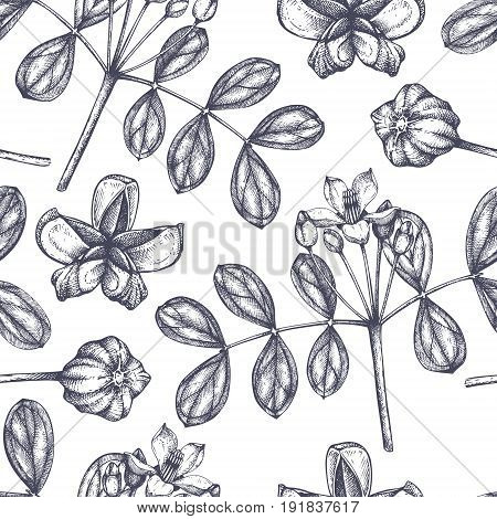 Vector hand drawn background with Guaiacum. Aromatic and medicinal plant sketch. Perfumery and cosmetics ingredients. Seamless pattern.