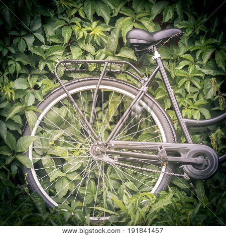 Bicycle with green foliage in background. Sweden Scandinavia Europe