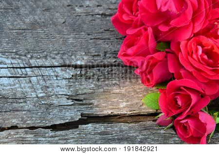 Burgundy rose in the corner on wooden background crack in the tree