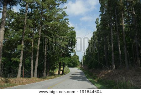 Scenic forest drive Scenic drive in a paved road through tall trees and green forests heading to War Eagle Mill in Rogers, Arkansas