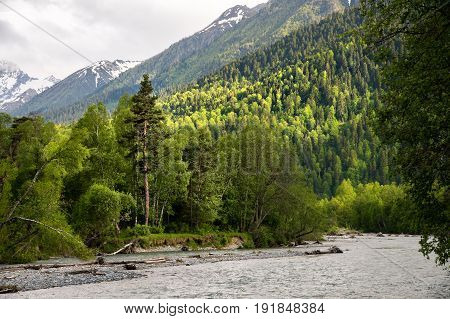 Mixed forest with a separate coniferous tree on the bank of a mountain river against the background of the Caucasus mountains and white clouds