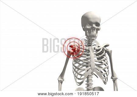 3D Illustration, Shoulder Painful Skeleton, Medical Concept.