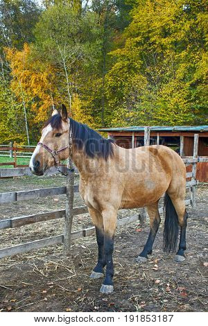 Portrait of beautiful horse in paddock autumn day