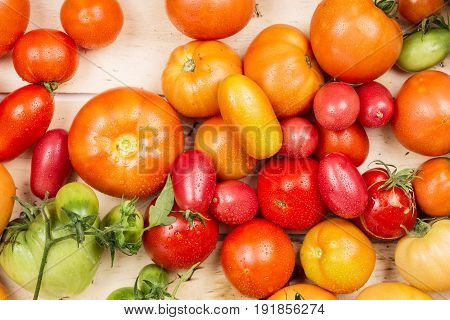 Close-up view of fresh tomatoes. Young juicy tomatoes. A lot of tomatoes. Summer agriculture farm market tray full of organic tomatoes.