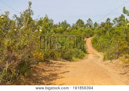 Trail With Esteva Flowers And Pines In Vale Seco, Santiago Do Cacem
