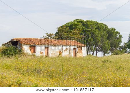 Farm House With  Flowers And Pine Trees In Vale Seco, Santiago Do Cacem