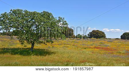 Spring Landscape Of Alentejo