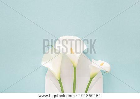 White envelope with beautiful callas on a blue background. mail for you
