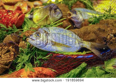 Raw Fresh Gilt-head Bream, Dorade Fish On Ice, Ready To Cook
