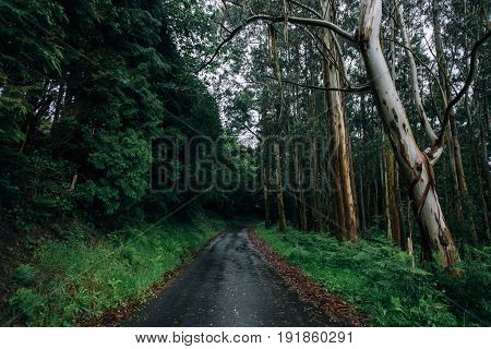 Wide open shot of narrow tiny country road in middle of rainy forest and jungle trees all over the trail concept freedom atmosphere magic and mystery