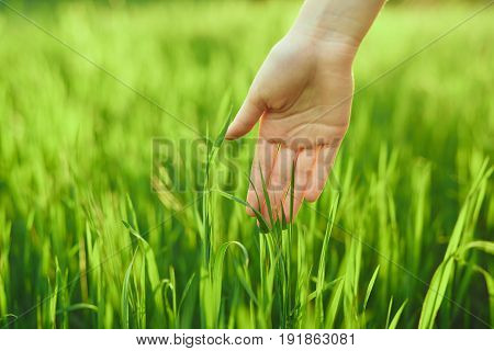 Green grass, grass, hand touches the grass.